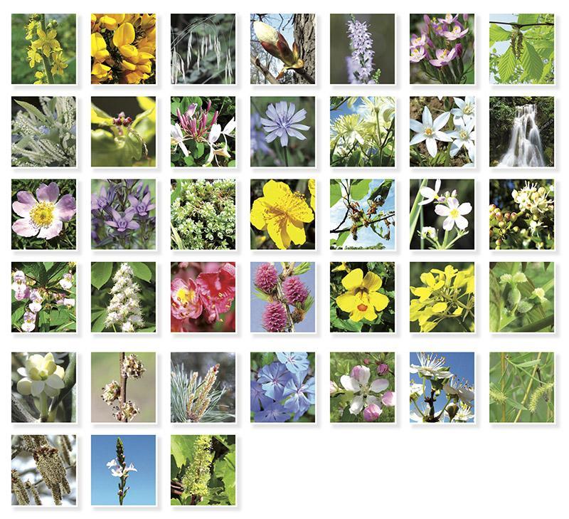 60bf8c821df1d 38 fleurs de bach